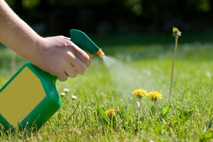 California States a Certain Herbicide Causes Cancer